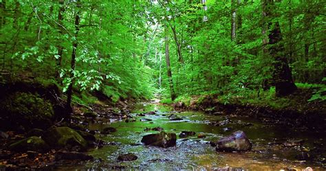 Prince William Forest Park - Find Your Chesapeake